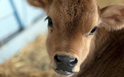 Processed Meat and Factory Farming is Bad: But Is Going Vegetarian the Answer?